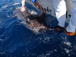 Fishing Photos, Black Marlin