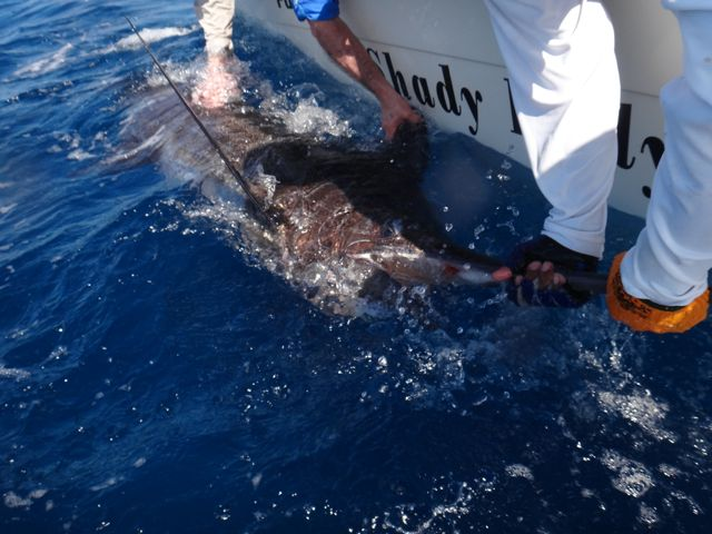 Fishing Photos, Black Marlin