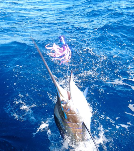 January Billfish Slam