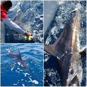 Fishing Photos, Blue Marlin