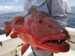Fishing Photos, Cubera Snapper