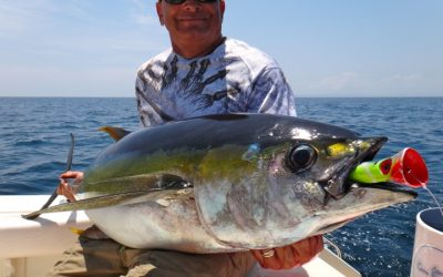 Yellowfin Tuna fishing in Panama
