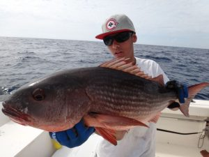 Fishing Photos, Mullet Snappers