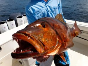 Fishing Photos, Snappers