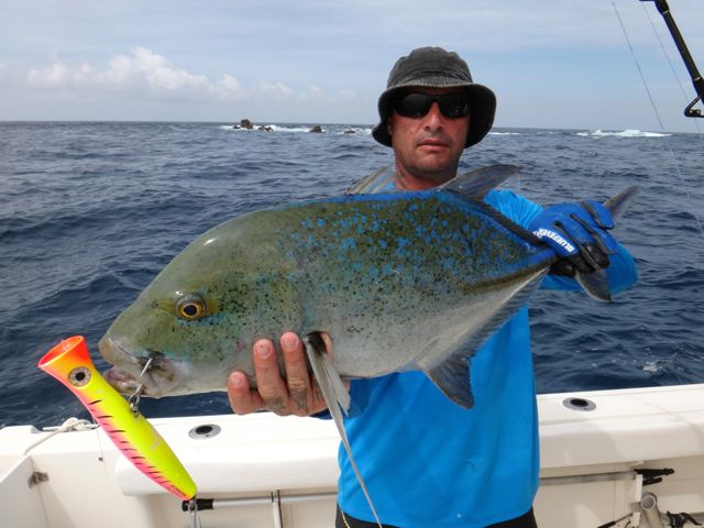 Fishing Photos, Bluefin Trevally