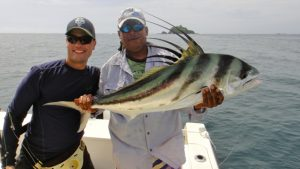 Roosterfish Dorado, Snappers