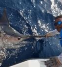 Marlin in Panama