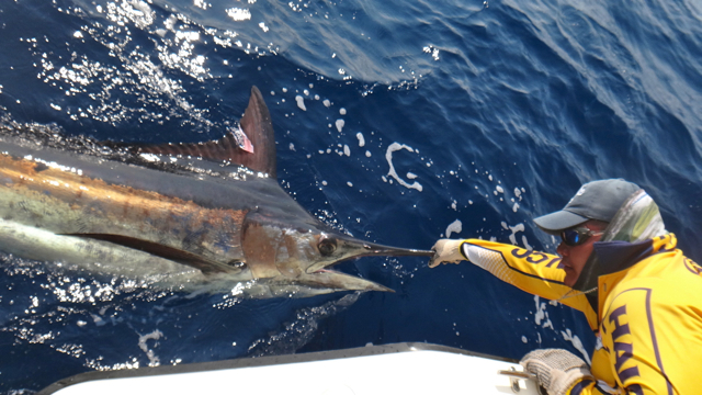 Fishing Photos, Billfish
