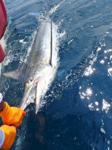 Fishing Report, Mix Bag