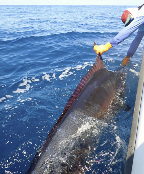 Fishing Photos, Black Marlin, Billfish