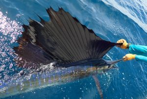 Panama Fishing Report, 2019 Panama Fishing Season