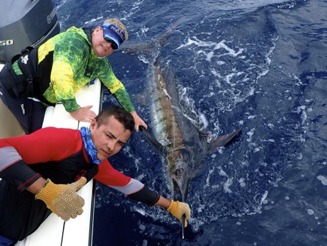 Fishing Photo, Blue Marlin