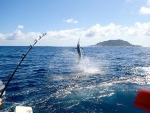 Sport Fishing Panama